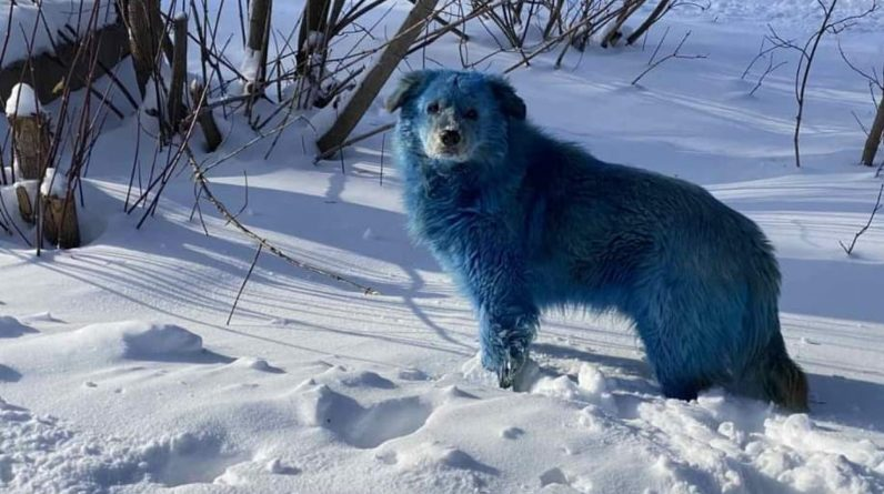 Blue dogs in Russia: we must find the reason