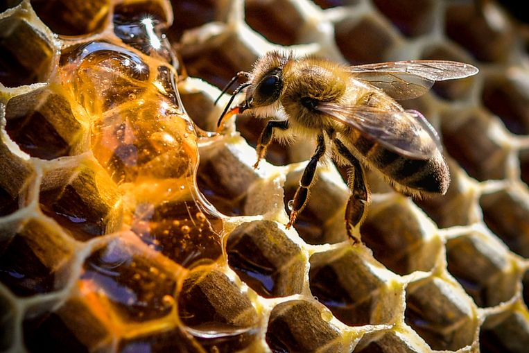Four hundred bees have to toil day and night for one kilogram of honey throughout their lives