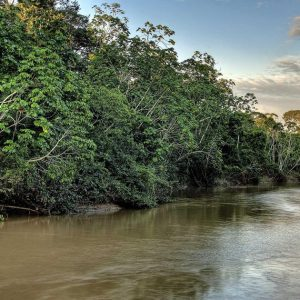 Plots of the Amazon rainforest illegally sold on Facebook |  Abroad
