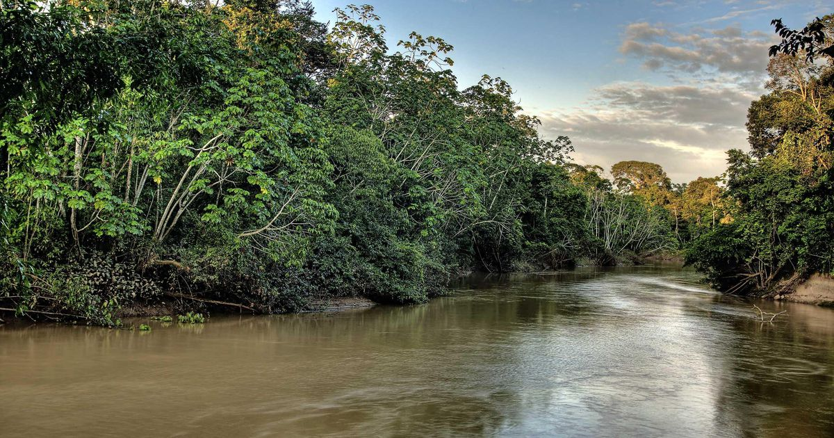 Plots of the Amazon rainforest illegally sold on Facebook    Abroad