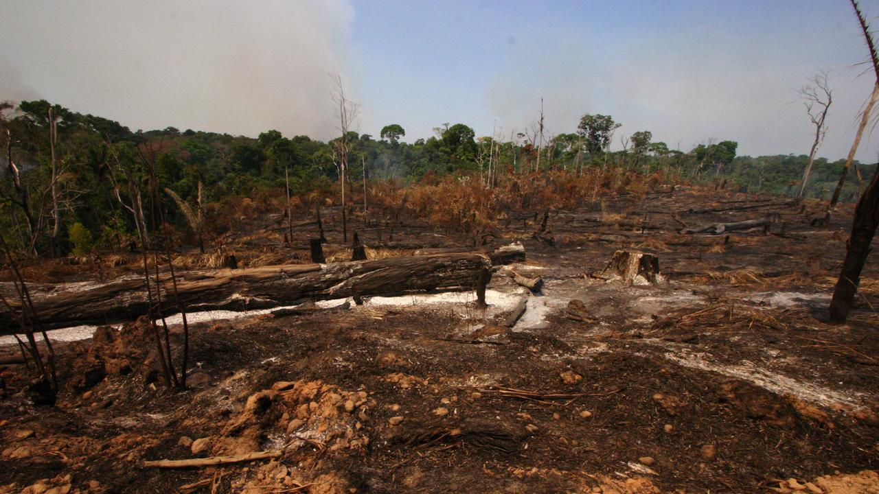 Brazilian President promises to end illegal logging in Amazon by 2030 |  right Now