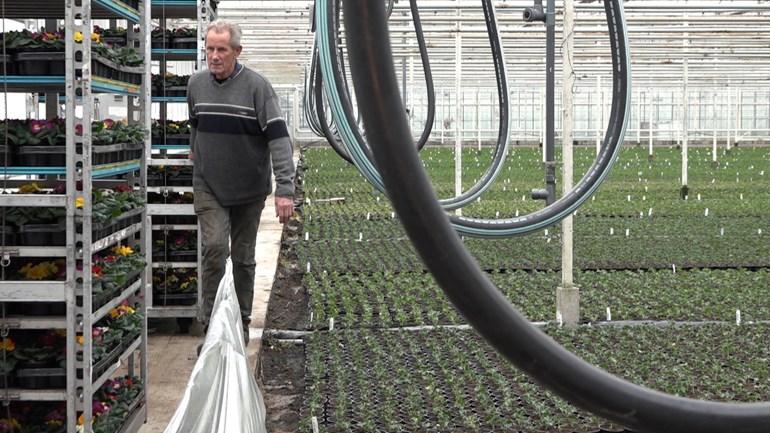 Plantenkweker Aad Scheffers