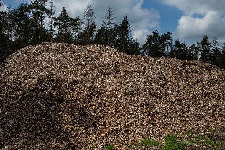 Overijssel freezes aid to companies that burn wood to produce energy