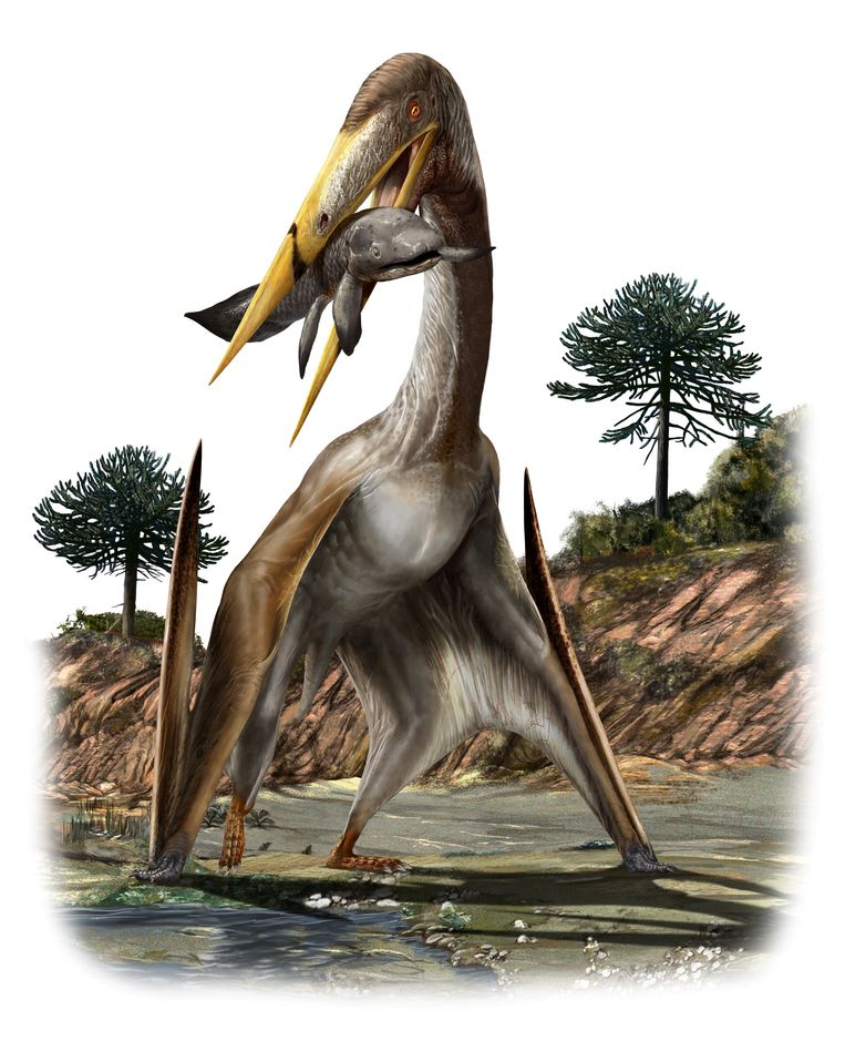 Pterosaurs amaze scientists: How could this massive reptile fly?