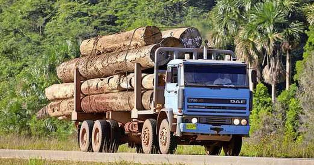Suriname blocks illegally harvested wood for China |  Financial issues