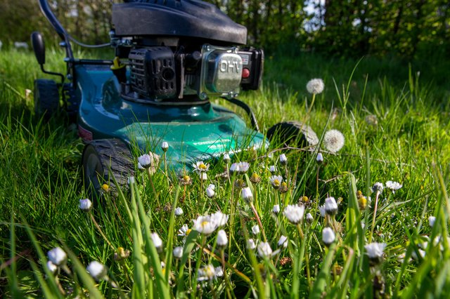 Mow Mei Not: Why do I hardly have flowers in my garden?  - Science