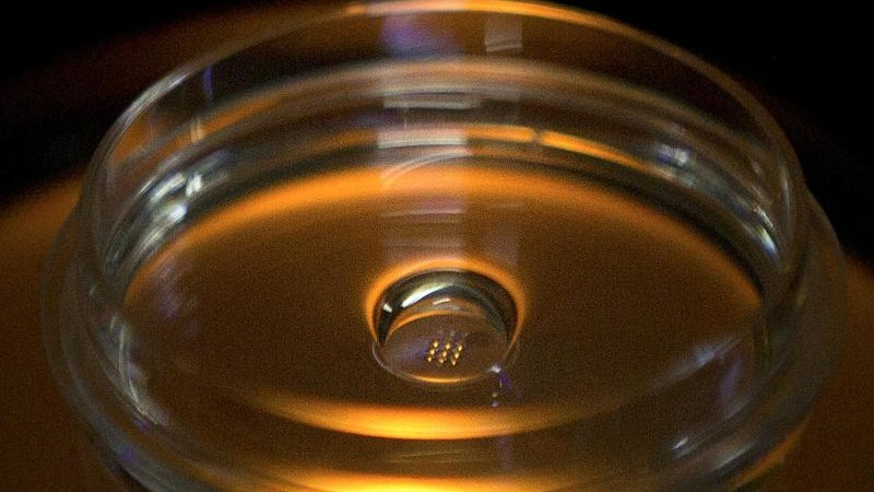 Science - Leopoldina: Embryo research is permitted in Germany