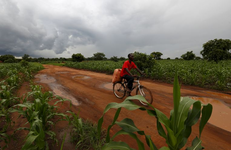 """A quarter of the world's population suffers from """"hidden hunger"""", scientists have discovered significant differences in the nutritional value of African crops"""