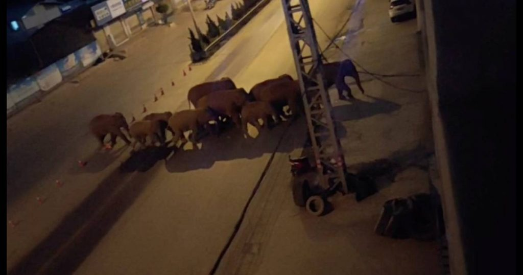 China is doing everything it can to keep herds of loose elephants away from major cities    abroad