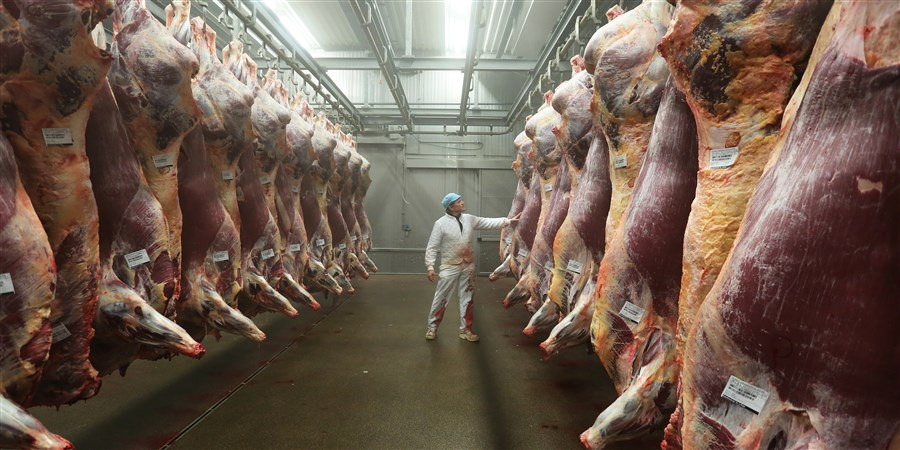 The Netherlands is the largest meat exporter in the European Union الاتحاد