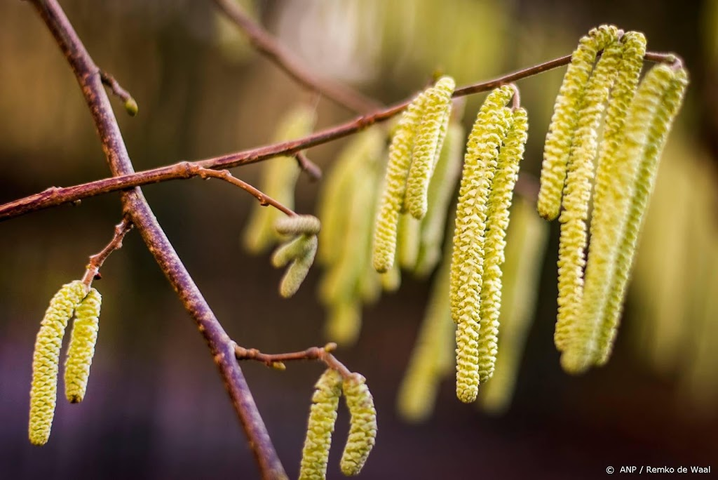 This remedy can help against hay fever - Wel.nl