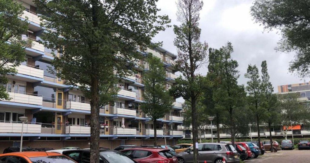 Infectious diseases destroy elm trees in Amstelveen