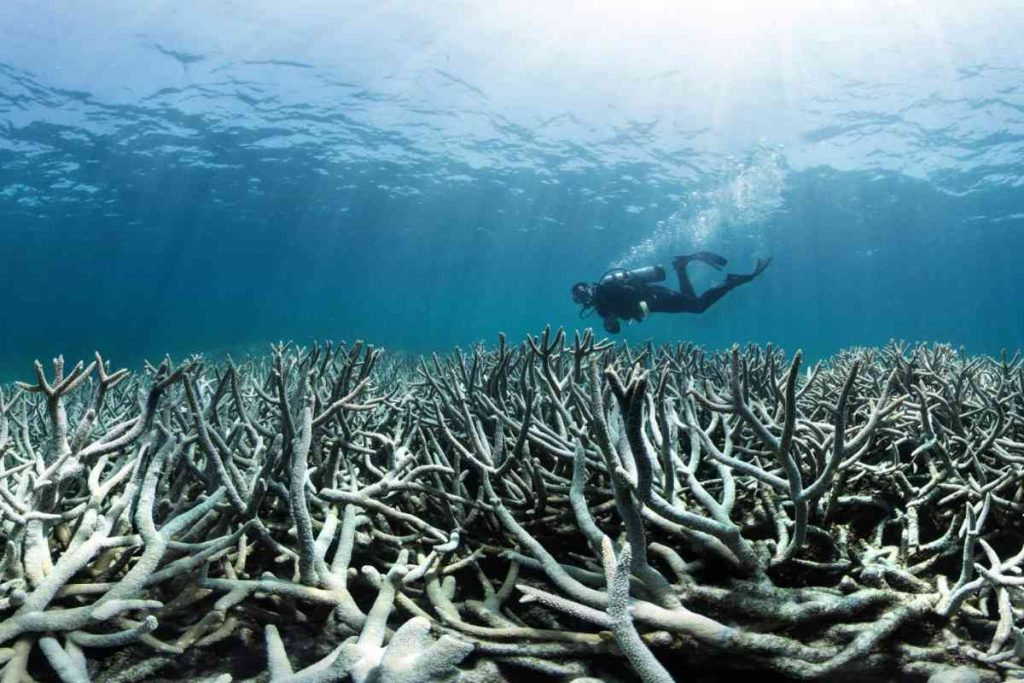 If you want to save coral reefs from destruction, hurry up