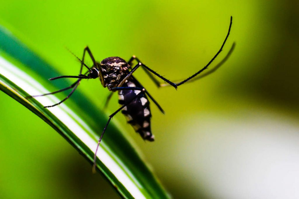Climate change may limit the spread of dengue fever
