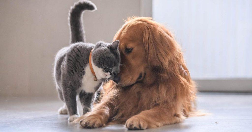Animal welfare is a science - Dagsavisen