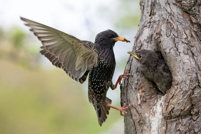 Females sing more than thought: about the structure of the brain of birds - the science