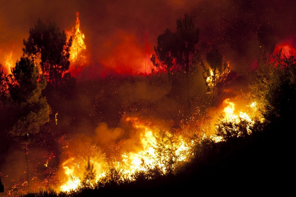 This summer wildfires caused high levels of emissions