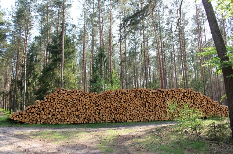 More and more forests are being added in Europe, but the quality is poor
