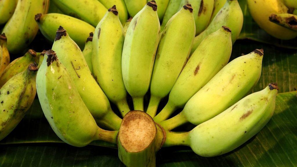 Will Holland Save Bananas?